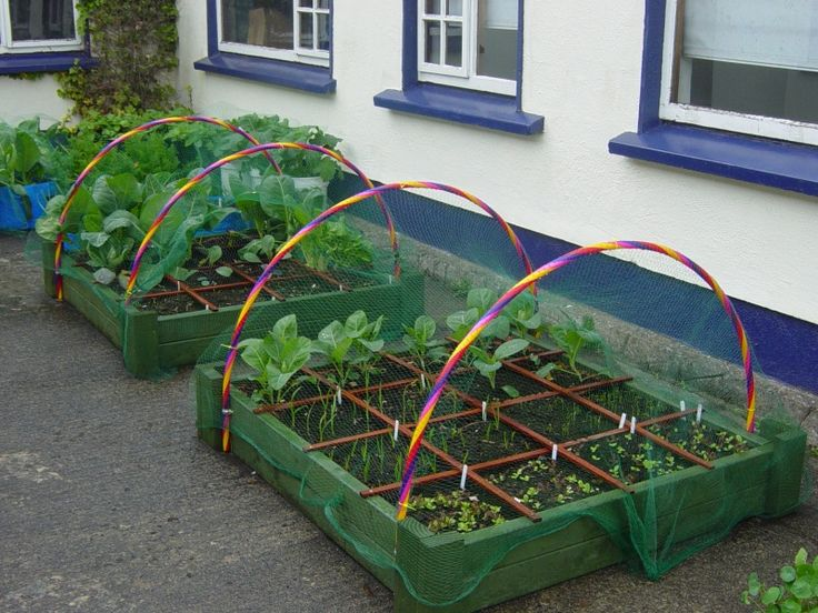 HULA HOOPS for plant netting! So much cooler than PVC! Ah, so excited by this!