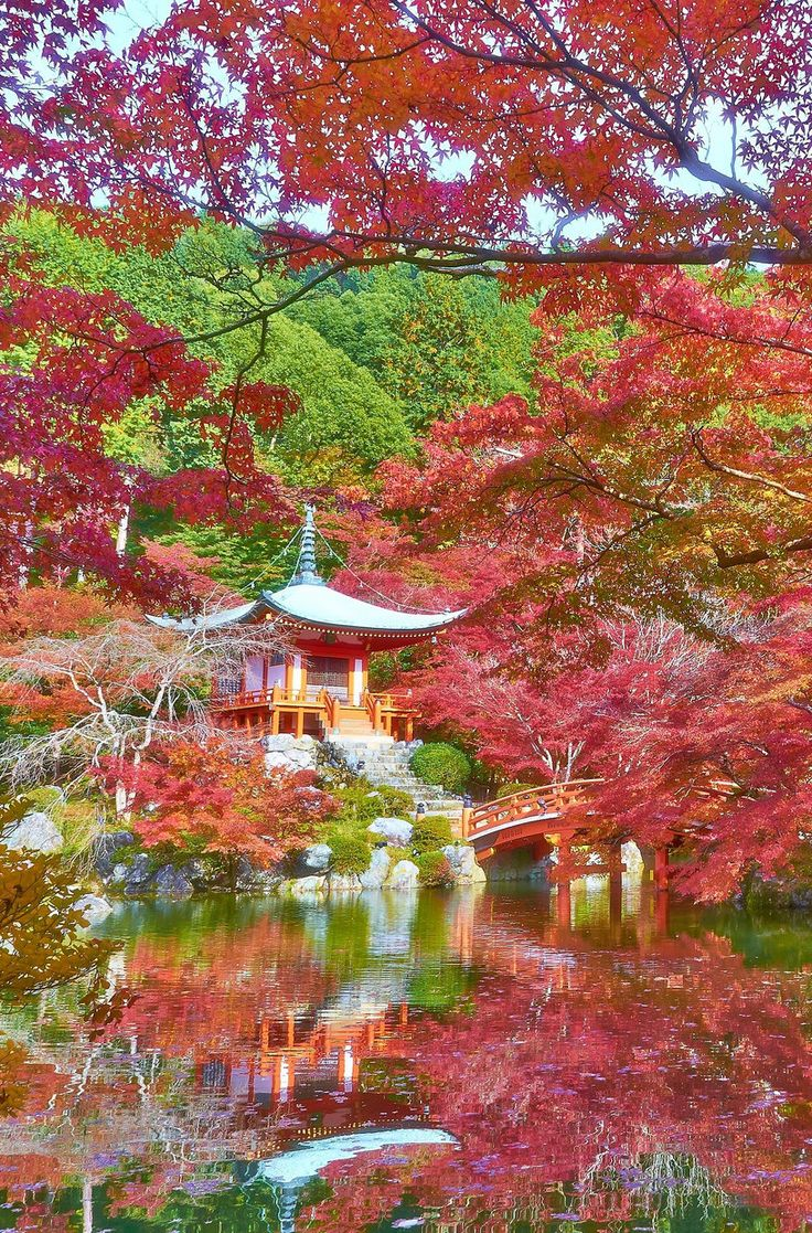 Forget the cherry blossoms, Autumn is the most beautiful time of year to visit Japan! And Kyoto has some of the most stunning fall foliage in the country. Click through to post to find out where to go :)