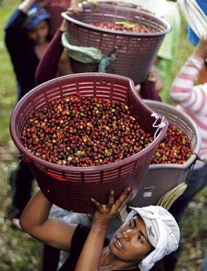 Interessanter Beitrag über Fairtrade im Kaffee-Handel (Foto: Reuters/Juan Carlos Ulate)