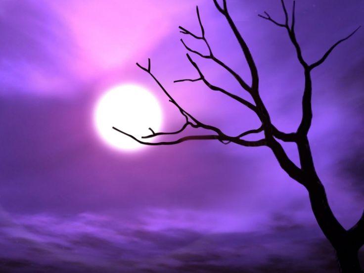 MostNature.com - Purple Tree Silvery Fog Full Nature Moon Shadows Night HD Wallpapers