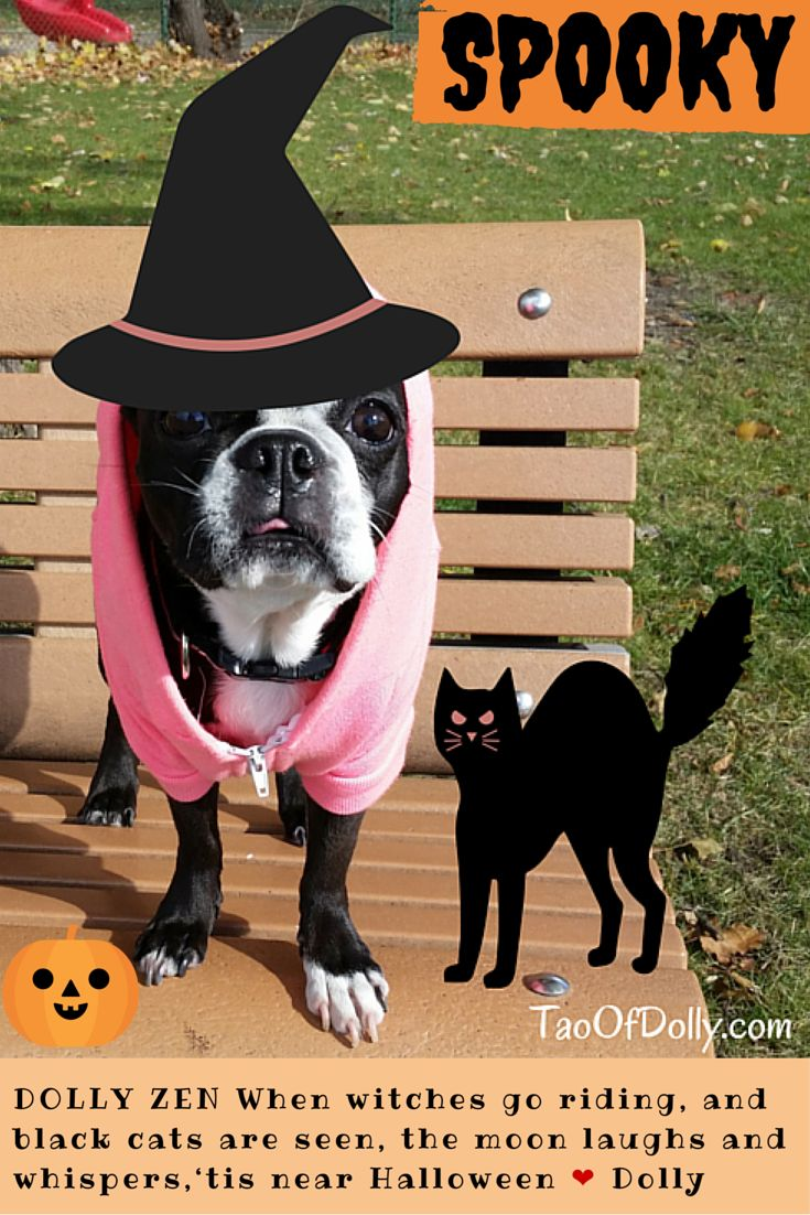 I Witch you a Spooky Halloween! ❤ Dolly