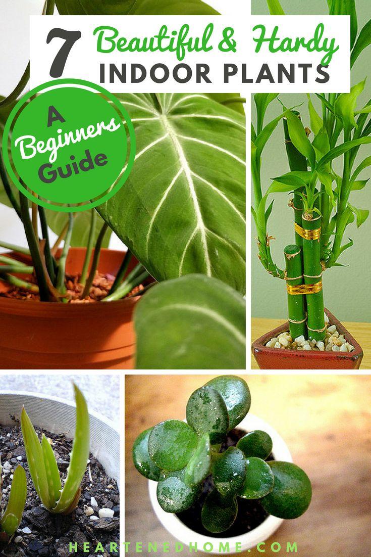 7 Hardy Indoor Plants For Inexperienced Gardeners 400 x 300