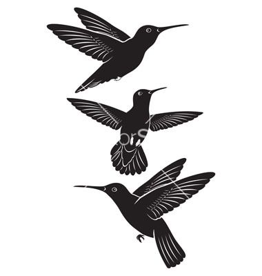 Hummingbird Vector 1149938 By Kvasay On Vectorstock
