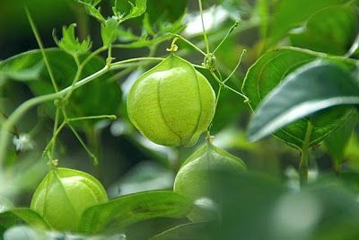 青果物の流通  ソーシャルメディアアグリ「地場活性化」のために: 9/27  2016年  【朝のご挨拶】