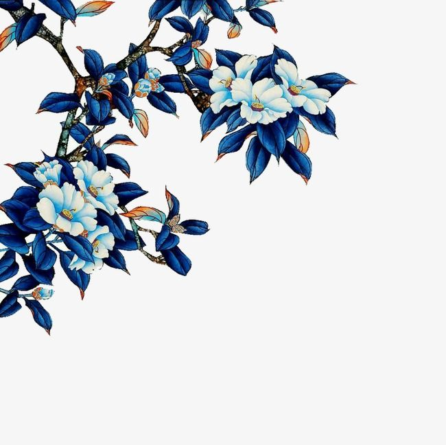 Blue Flowers Flowers Blue Leaves Squid Png Image And