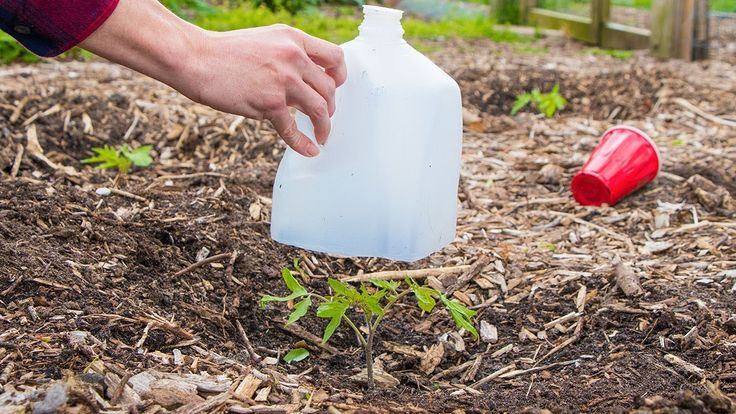 5 Biggest Mistakes When Growing Seedlings and