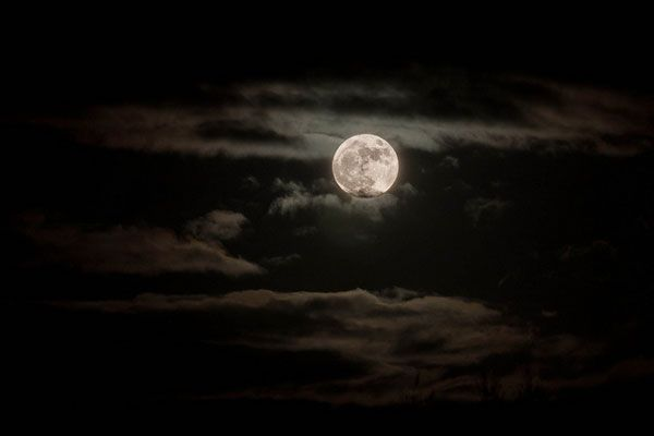 I didn't take this picture, I don't know who did, but this is what the super moon looked like from my yard.  Gorgeous!: Happy Full, Cloudy Moon, July Moon, Alonesea Sky, Super Moon, Shinee Moon, Moon Bright, Full Moon, Black Sky