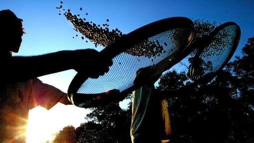 Titel : Historische droogte dreigt Braziliaanse koffieoogst van 2015 te verstoren / Bron : Het Laatste Nieuws / Datum : 24/12/2014 / Plaats : Brazilië