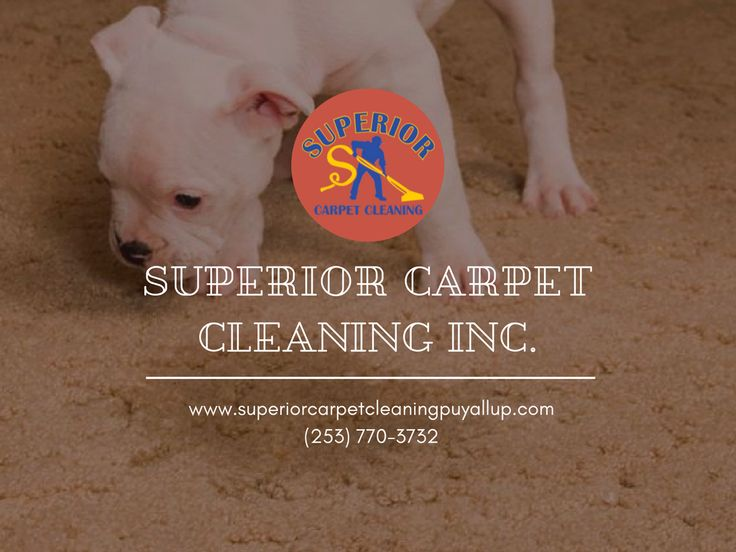 Apartment Cleaning in Puyallup, WA Carpet and Fabric Protection in Puyallup, WA Commercial Carpet Cleaning in Puyallup, WA Affordable Carpet Cleaning in Puyallup, WA Professional Carpet Cleaning in Puyallup, WA Superior Carpet Cleaning in Puyallup, WA Carpet Cleaning Services in Puyallup, WA Superior Homes in Puyallup, WA