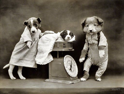A hundred years old -- Photos from 1914!   Dog-Pounds: 1914