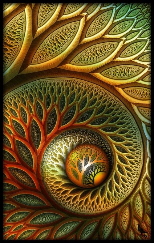 Fibonacci - the creative formula that manifest itself in seashells, flowers, but is also a mathematical formula in many things, the creative formula for life