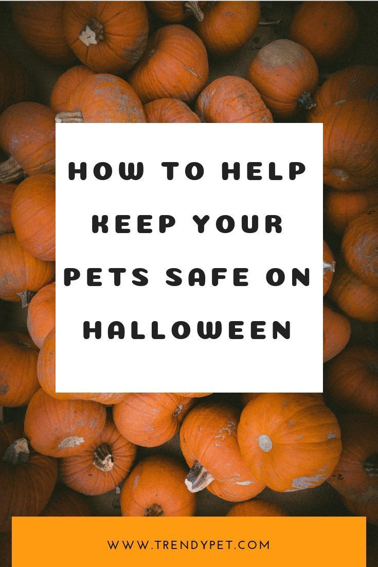 How To Keep Pets Safe During Halloween 2020 How to Help Keep Your Pets Safe On Halloween   These Halloween pet