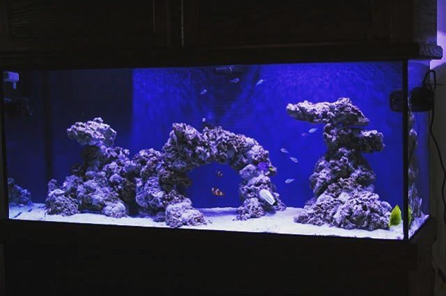 VERY COOL !!! BEAUTIFUL aquascape!!! WOW!! Can't wait until he puts corals! If you want your tank featured send it to DIRECT MESSAGE !!!