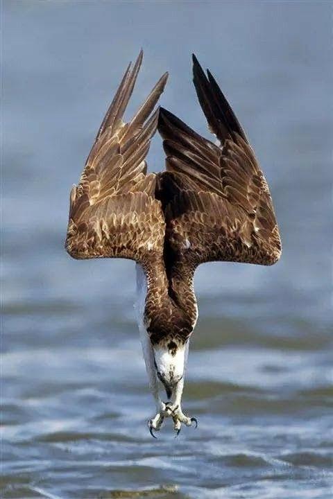 Les 27 meilleures images du tableau Avian Affection sur Pinterest ... 31f542f608a