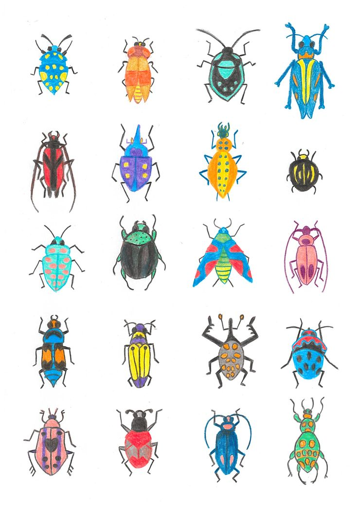 Insects and beetles illustration, the colored version