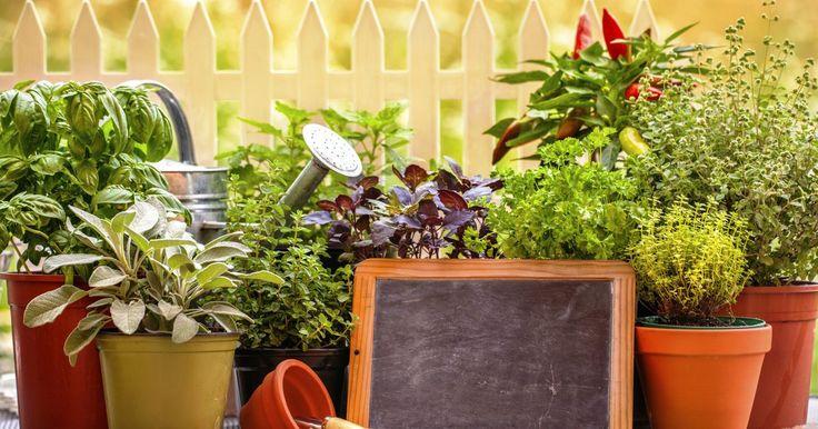 Como fazer uma horta aromática e decorativa. Uma horta em casa pode ser a maneira mais fácil de introduzir mais ingredientes e temperos frescos na sua alimentação, além de deixar a sua cozinha ou varanda muito mais bonita. As opções são variadas e incluem hortaliças e ervas, como tomilho, estragão, hortelã, alecrim, salsinha e cebolinha, coentro, capim-limão e sálvia. Escolha suas hortaliças ...