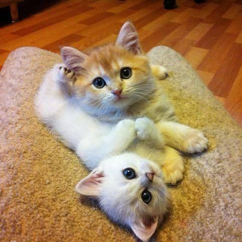 Cutest kitties!