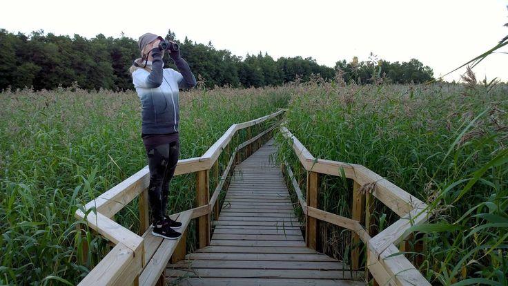 Villa Elfvik - Helppo kaupunkiluontokohde | Tuleeko sinulle koskaan tunne, että nyt on pakko päästä luontoon?