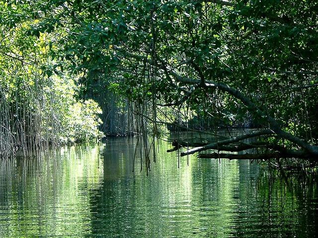 Jamaica - Black River #Jamaica