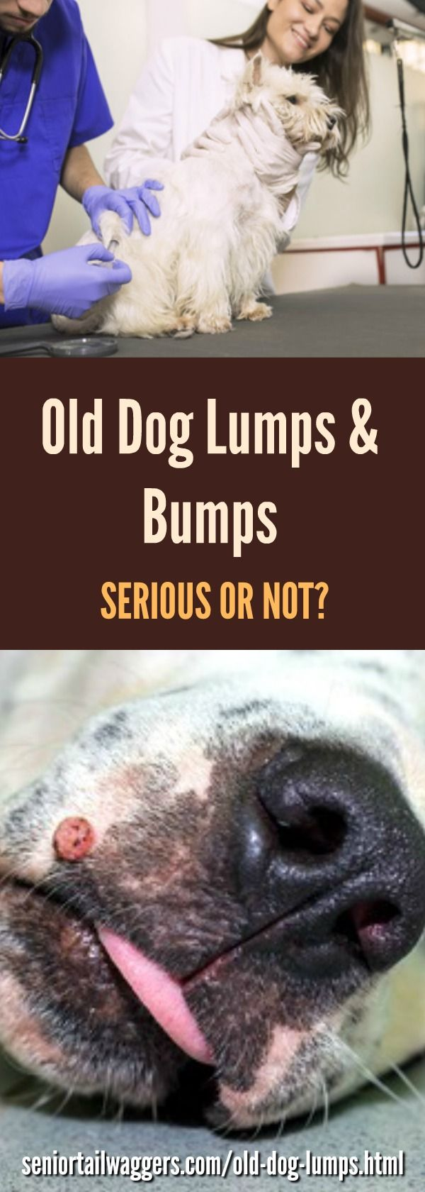 Find out whether your senior dogs lumps and bumps are harmless, or a sign of something more serious.