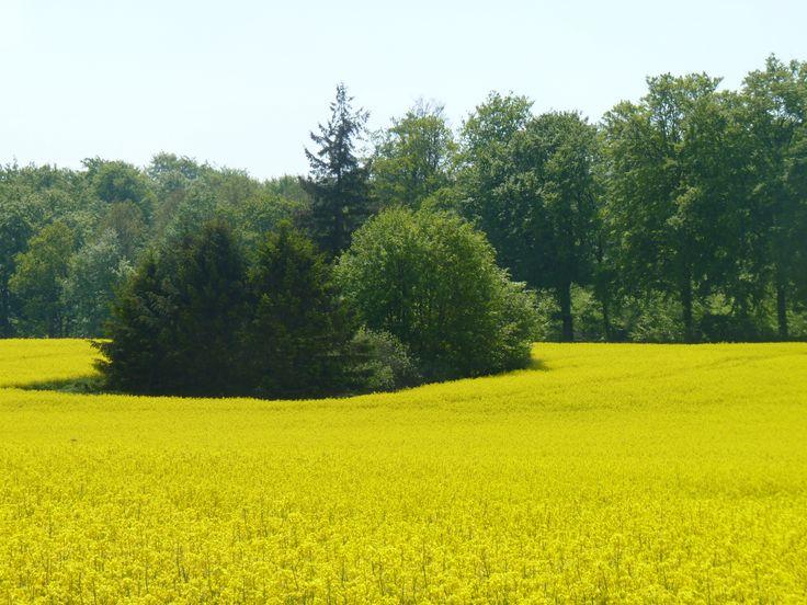 Spring Denmark