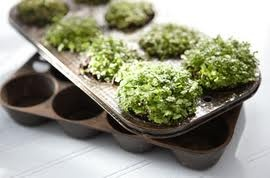 Gardening Naturally with Claudia: Miniature Gardens - Tabletop and Landscape