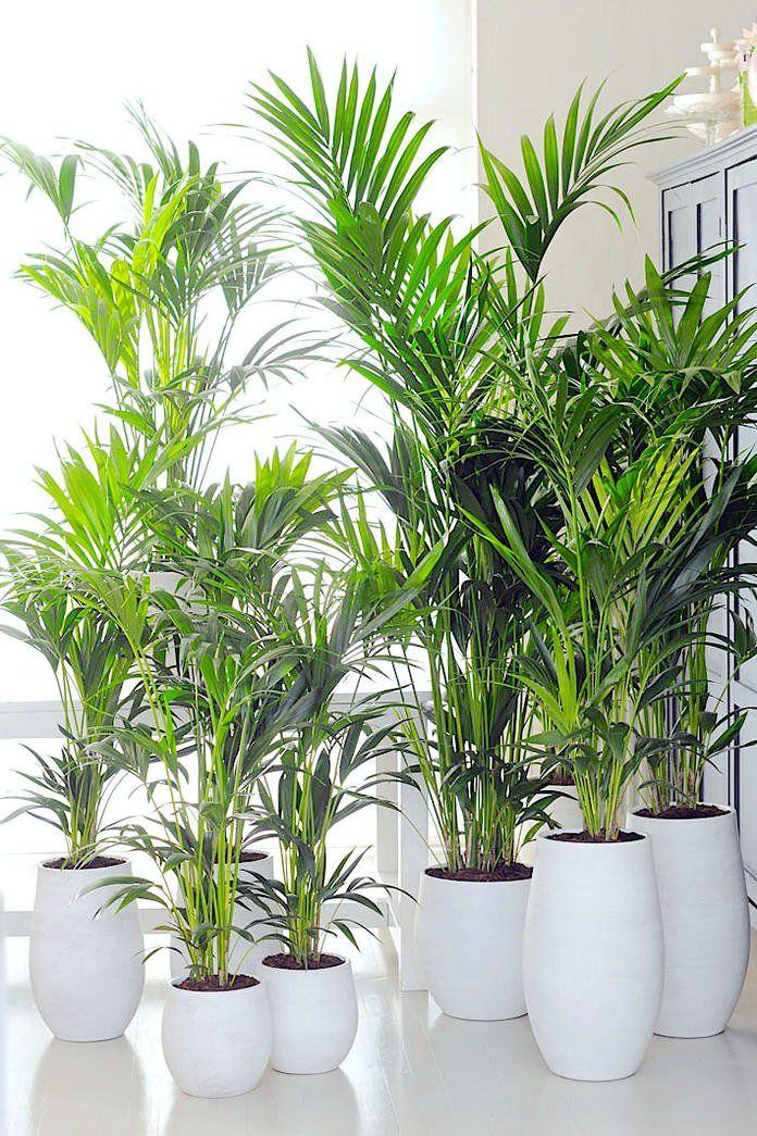 11 Zimmerpflanzen Fur Dunkle Ecken H O M E Pinterest Pflanzen