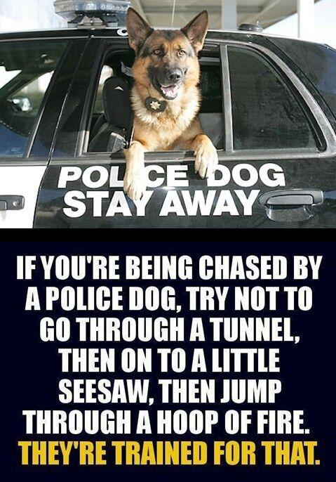 K9 police > good work boys and girls! #dogs #pets #GermanShepherds…