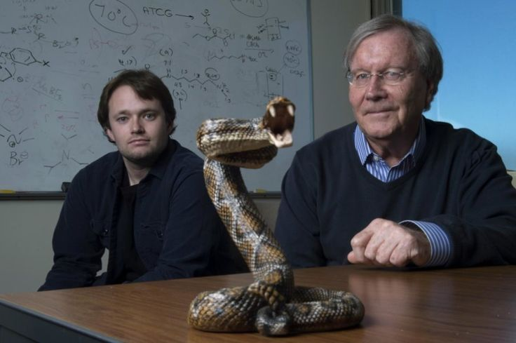 UCI chemistry professor Ken Shea (right) and doctoral student Jeffrey O'Brien have developed a broad-spectrum snake venom antidote.Credit: Steve Zylius / UCI Chemists at the University of California, Irvine have developed a way to neutralize deadly snake venom more cheaply and effectively than with traditional anti-venom