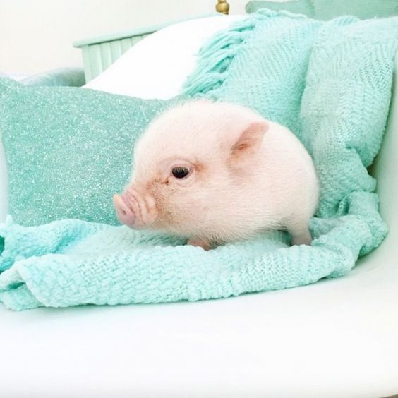 13 Cute Pigs for Your Monday