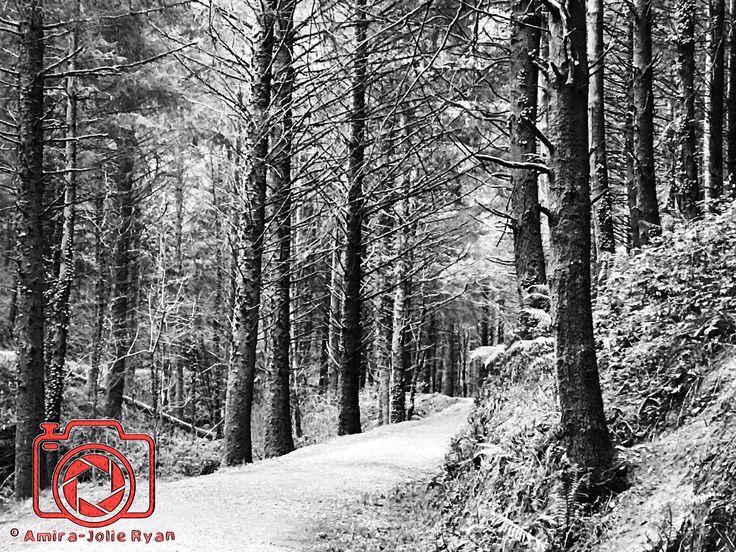 Cardinham Woods, near the Cornish town of Bodmin. Winter Woodlands.  #Winter #woodlands #AmiraJolieRyan #Photography