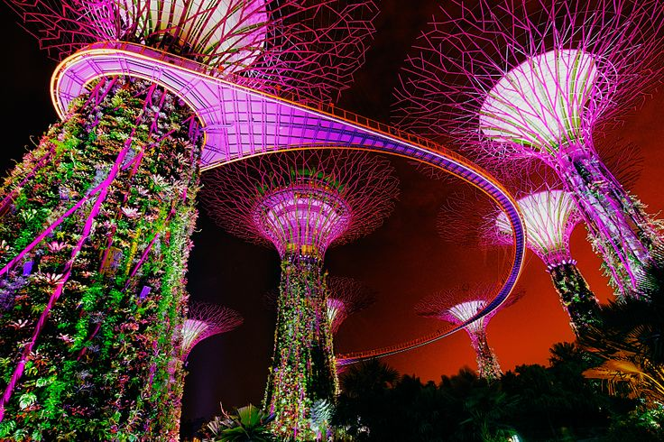 Covered in vegetation and illuminated with coloured lighting, these giant, artificial, tree-like structures stand in two groves in Singapore's Gardens by the Bay.
