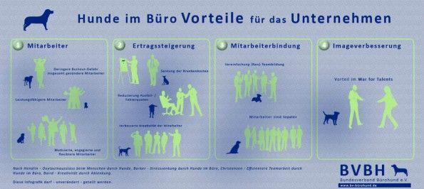 Tiere am Arbeitsplatz: Bürohund soll vor Burnout schützen