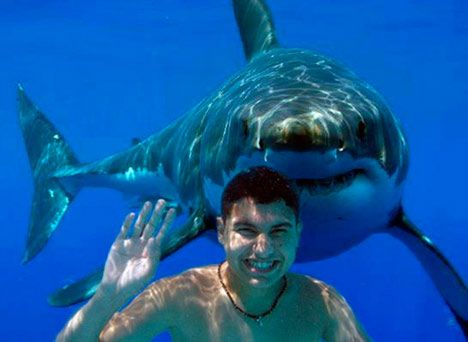 don't turn around!: Haha Funny, Sharks Things, Favorite Places, Funny Pictures, Jaw Movie, Sharks Attack, Adventure Travel, Ocean Wildlife, Finding Sharks