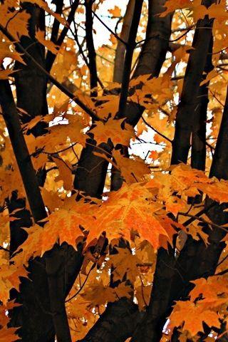 Fall: Fall Beautiful, Fall Leaves, Beautiful Leaves, Warm Colors, Fall Colors, Autumn Leaves, Autumn Fall, Favorite Seasons, Fall Trees