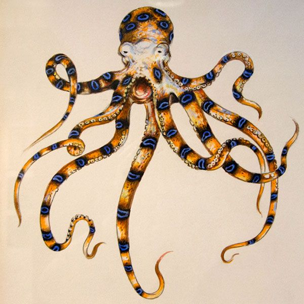 Blue ringed octopus tattoo james bond - photo#3