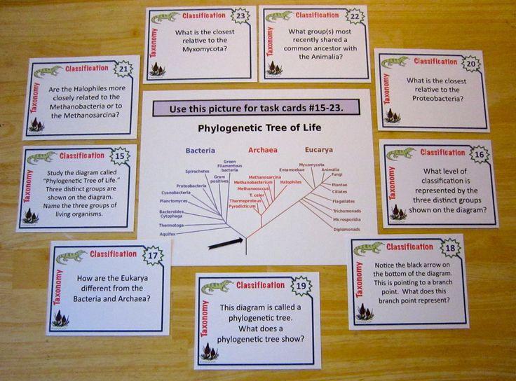 Microgreen Farming and Nutrition  A Discovery Based Laboratory     Teachers Pay Teachers