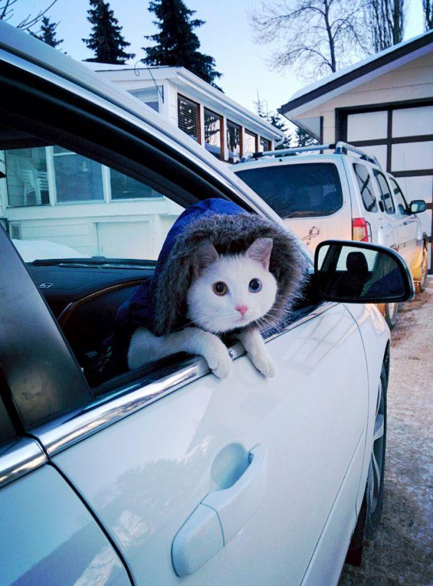 E este gato em um BELO MOLETOM COM CAPUZ. | 21 gatos que não percebem como eles são burros