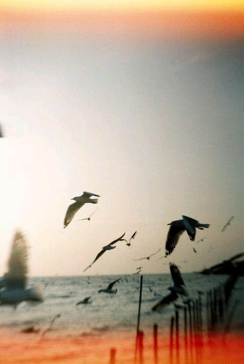 Solo il rumore del mare può capire l'andirivieni delle tue mani. © Cat