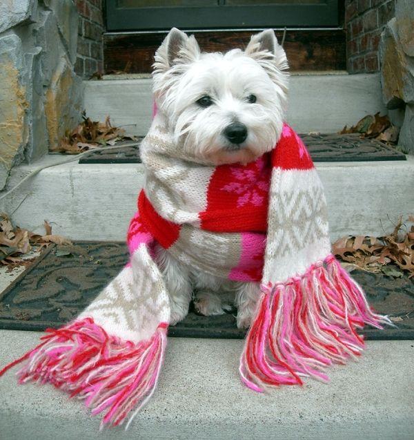 Bundled up by bessie Westie dogs, Love pet, Westies