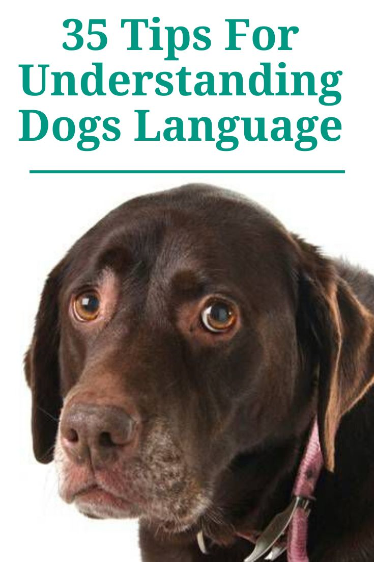 Do you know what is your dog trying to tell you in 2020