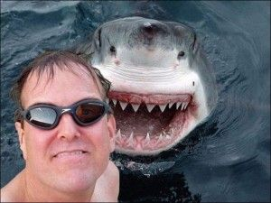 I kid you not, checkout shark selfie with man almost eaten
