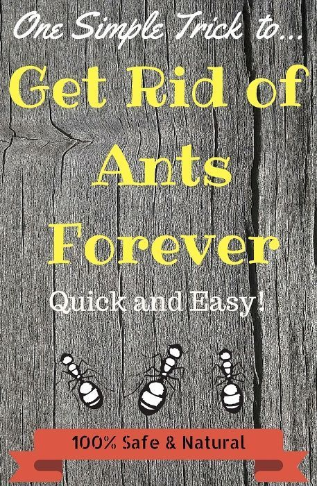 Learn how to get rid of ants in your house with this amazing new ant repellent. This natural solution is simple, 100% natural and works like a charm!