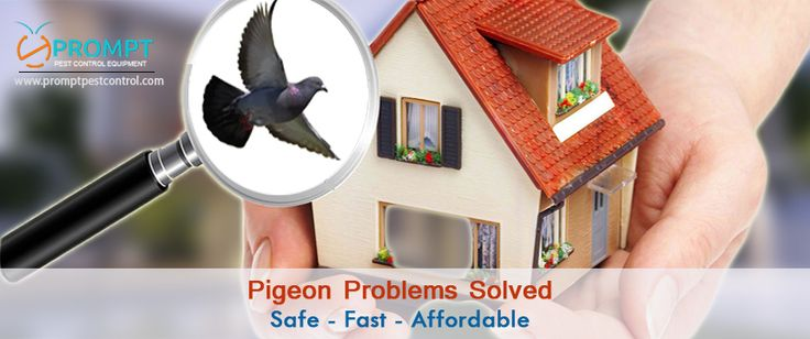 Protect your family and enjoy outdoor activities by applying #pigeon_repellent from prompt pest control, you will get this device at economical rates with all the required features.