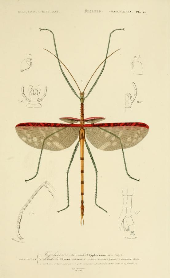 Dictionnaire universel d'histoire naturelle résumant et complétant tous les faits présentés par les encyclopédies