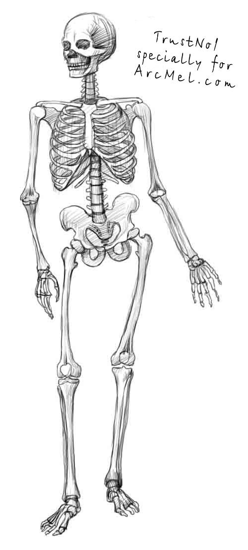 How to draw a skeleton step 4 | art | Pinterest | Skeletons ...