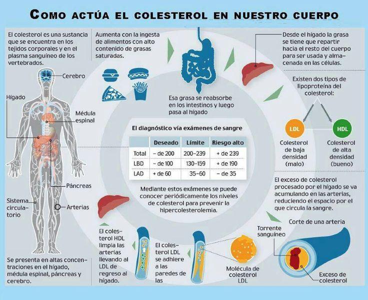 Como actua el colesterol en el cuerpo