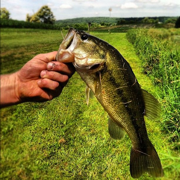 Great bass fishing picture captured on Instagram