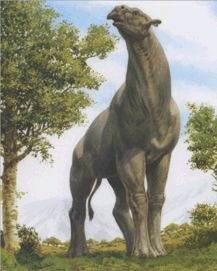 Paraceratherium. Larges known land mammal (about 16 ft tall at the shoulders). Prehistoric herbivore.