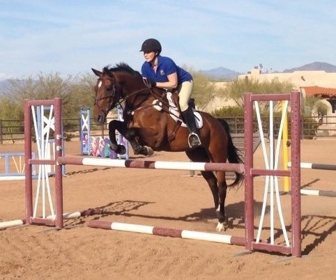 Bay Belgian Warmblood Mare, Ch AA Jumper in Arizona. DreamHorse.com is the premier horse classifieds site with horses for sale, lease, adoption, and auction, breeding stallions, and more.